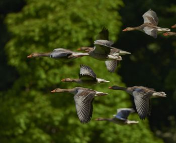 Lessons from geese help team performance
